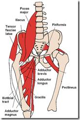 hip-girdle